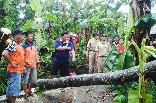 TRC BPBD dan Relawan Melakukan Evakuasi Pohon Tumbang di Desa Candirejo Ngawen