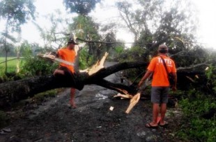TRC BPBD sedang melakukan evakuasi pohon yang tumbang akibat angin kencang di Desa Mlese Ceper (Foto Istimewa)